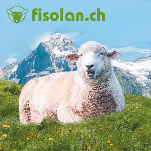 Fisolan AG mit Schaf in den Bergen